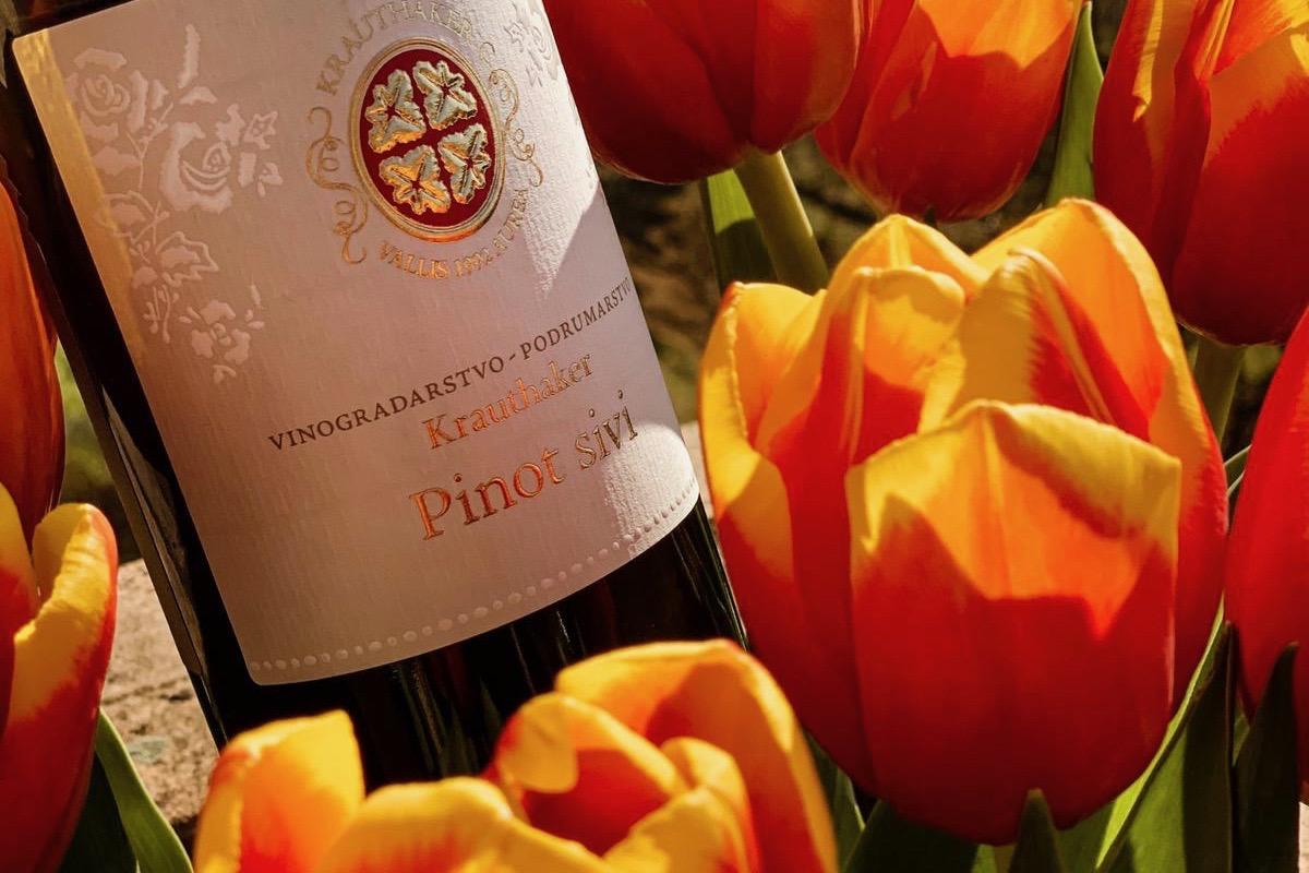 Krauthaker Pinot sivi harmonija suvremenog i tradicije